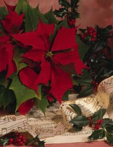 weihnachtsstern-und-notenblatt