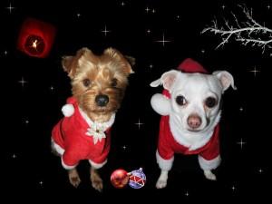 hunde-im-weihnachtsmannkostüm