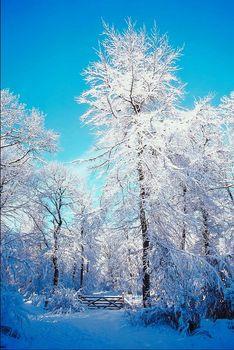 weihnachten in den bergen verbringen und im schnee bescherung feiern. Black Bedroom Furniture Sets. Home Design Ideas